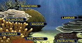 Endangered species international hard coral growth types httpkruppwcchawaii publicscrutiny Images